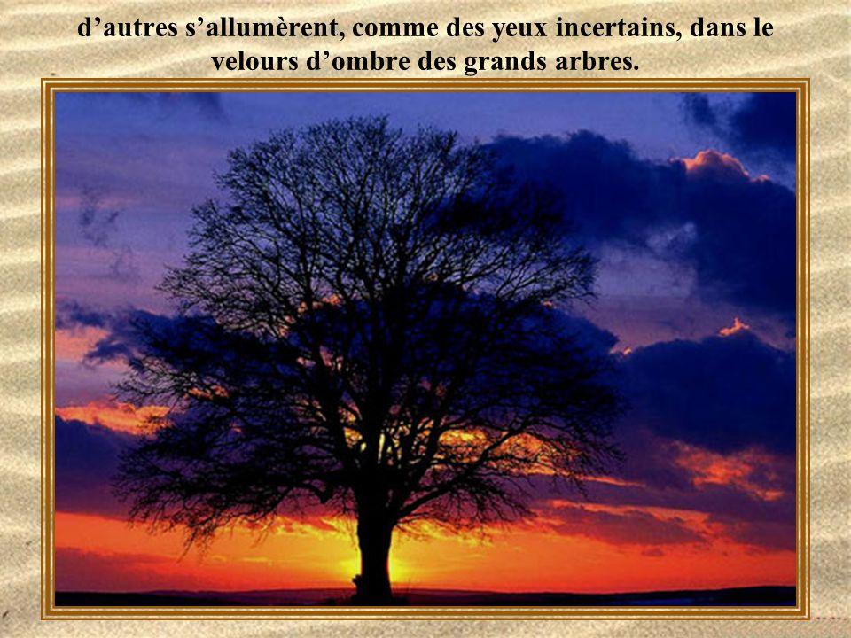 d'autres s'allumèrent, comme des yeux incertains, dans le velours d'ombre des grands arbres.