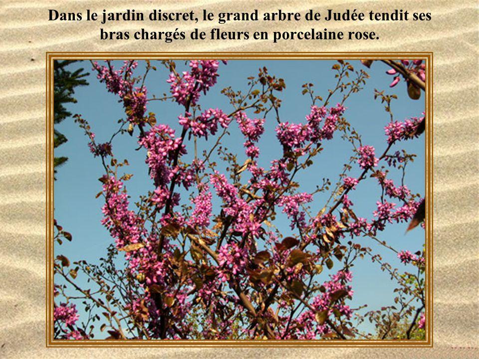 Dans le jardin discret, le grand arbre de Judée tendit ses bras chargés de fleurs en porcelaine rose.