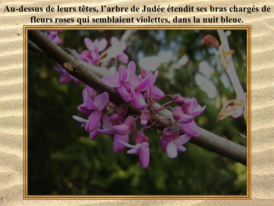 Au-dessus de leurs têtes, l'arbre de Judée étendit ses bras chargés de fleurs roses qui semblaient violettes, dans la nuit bleue.