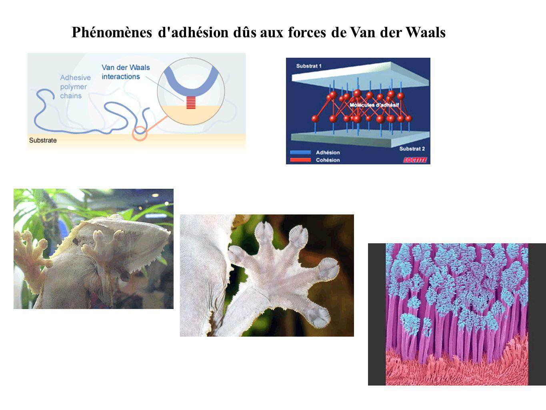 Phénomènes d adhésion dûs aux forces de Van der Waals