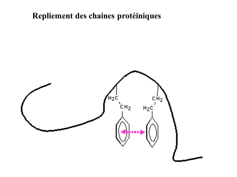 Repliement des chaines protéiniques