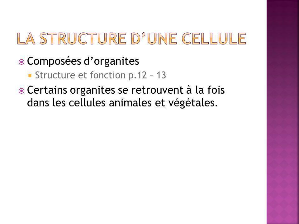 La structure d'une cellule