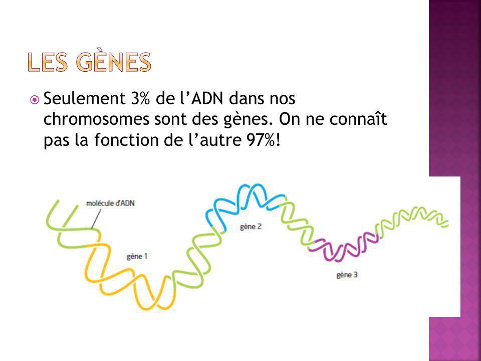Les gènes Seulement 3% de l'ADN dans nos chromosomes sont des gènes.