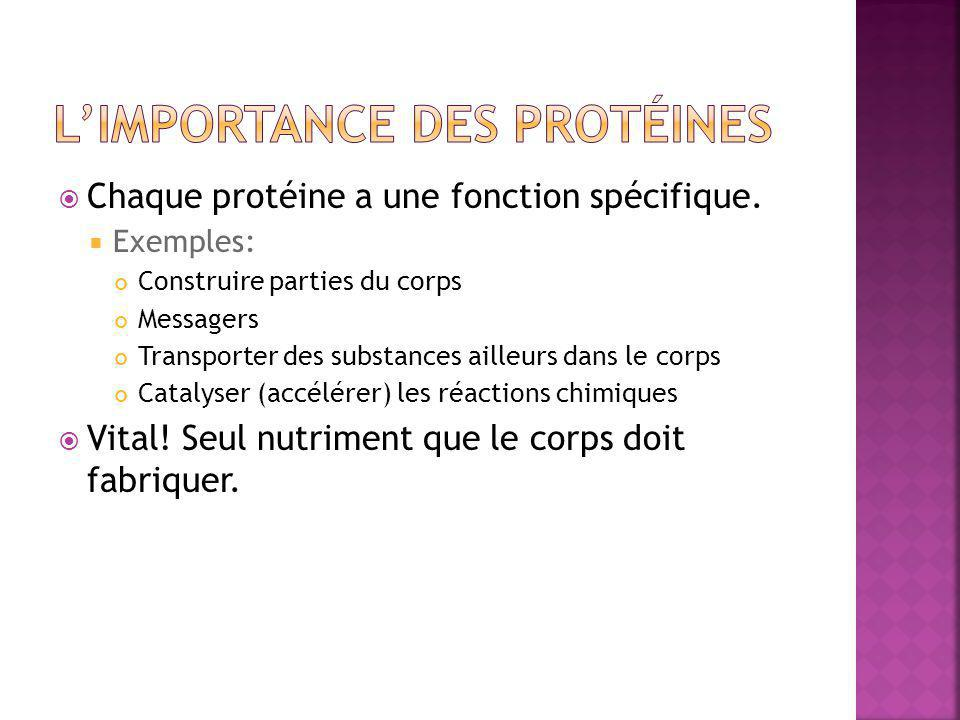 L'importance des protéines
