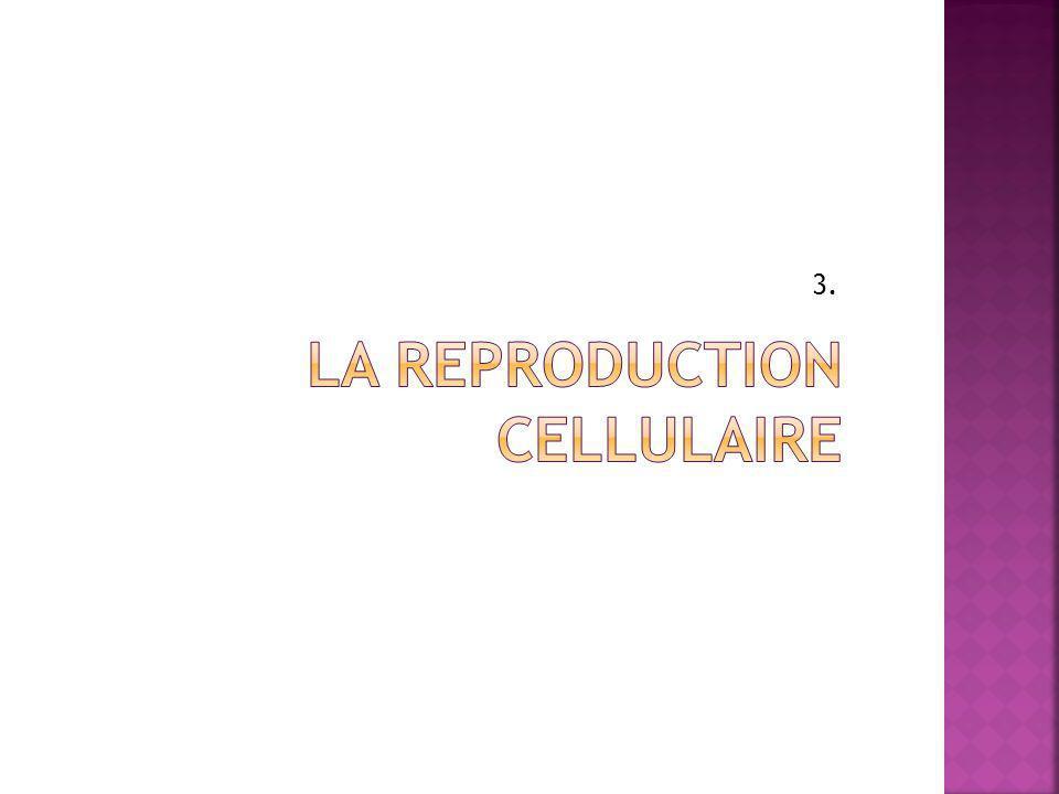 La reproduction cellulaire