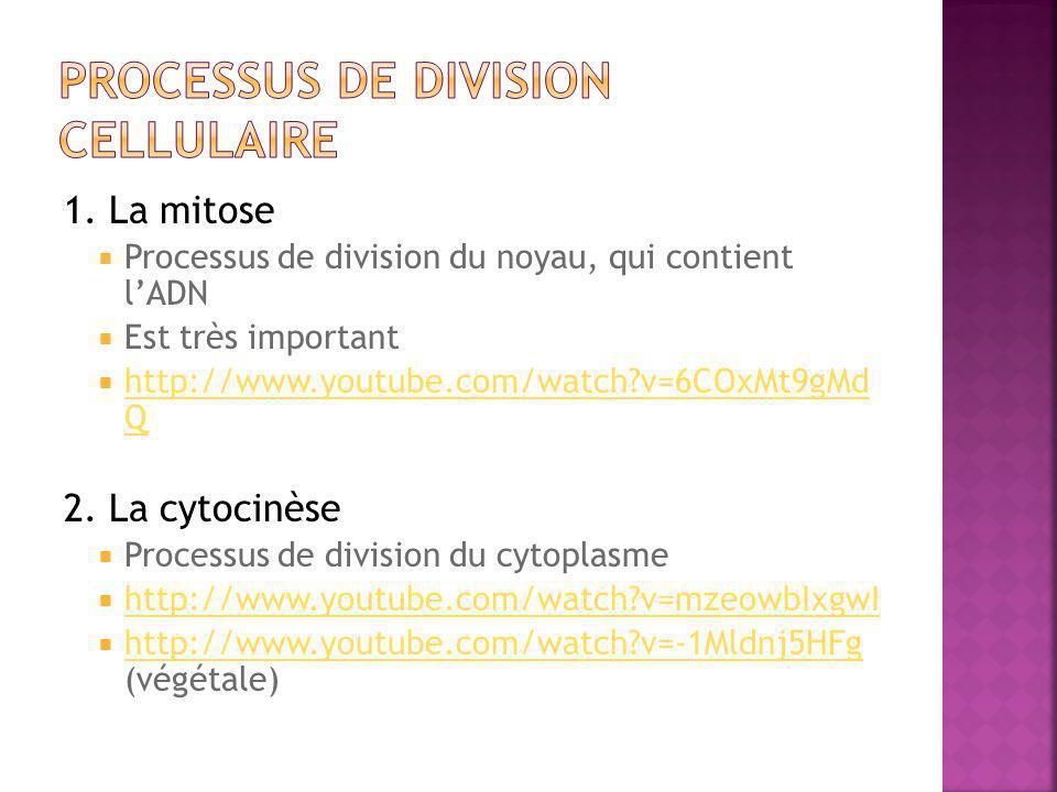 Processus de division cellulaire