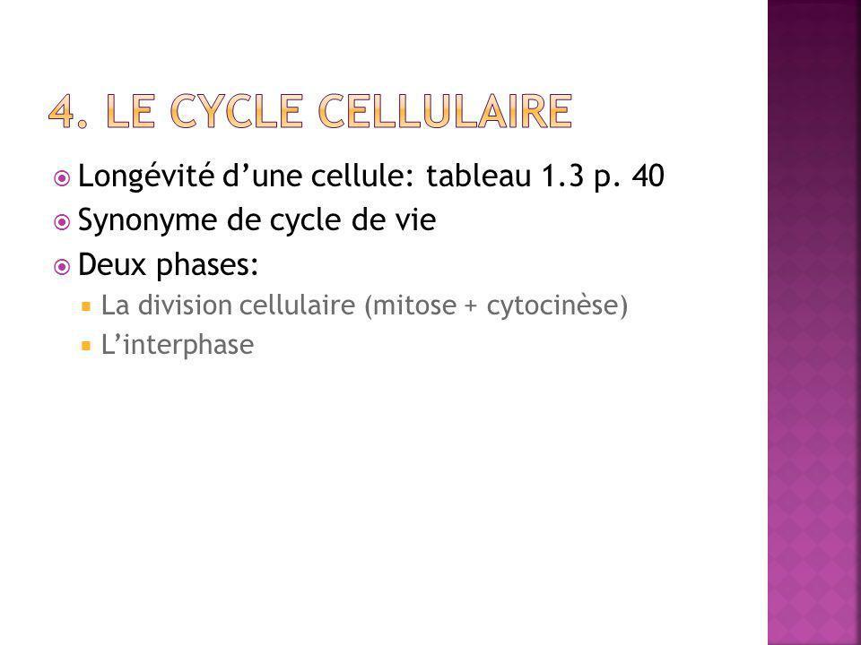 4. Le cycle cellulaire Longévité d'une cellule: tableau 1.3 p. 40
