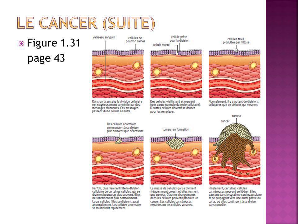 Le cancer (suite) Figure 1.31 page 43