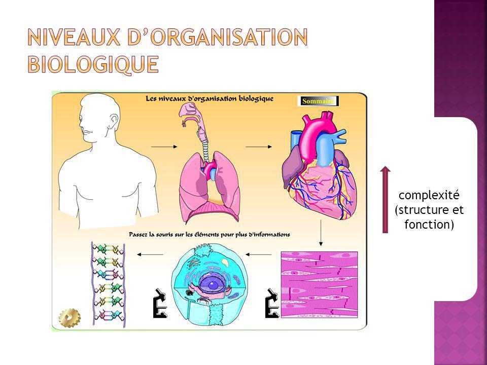 Niveaux d'organisation biologique