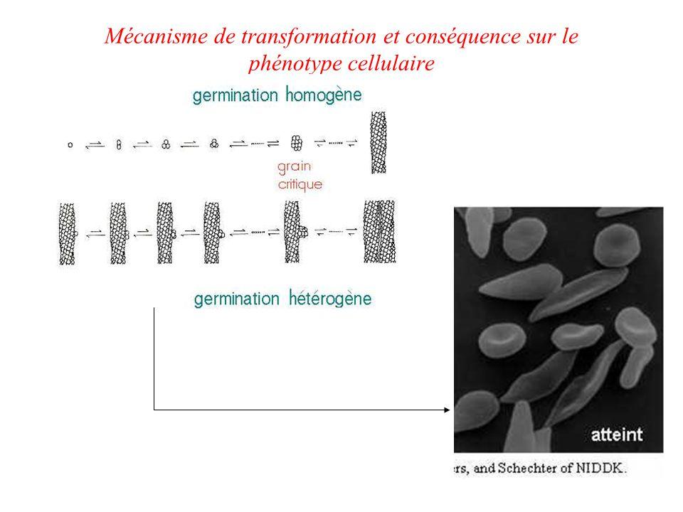 Mécanisme de transformation et conséquence sur le phénotype cellulaire