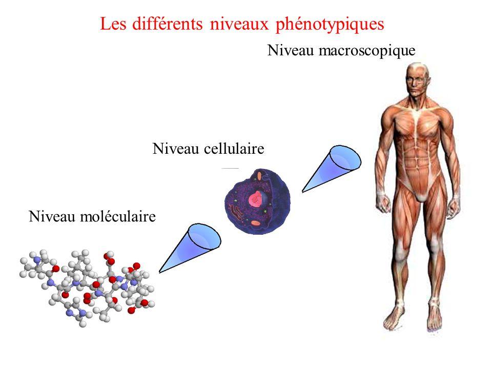 Les différents niveaux phénotypiques