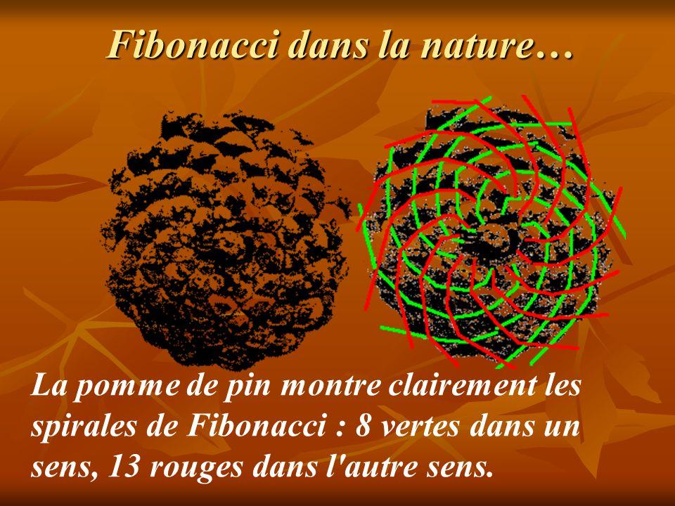 Fibonacci dans la nature…