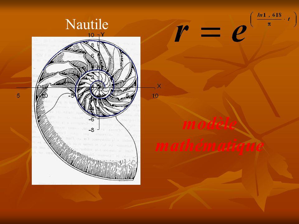 Nautile modèle mathématique