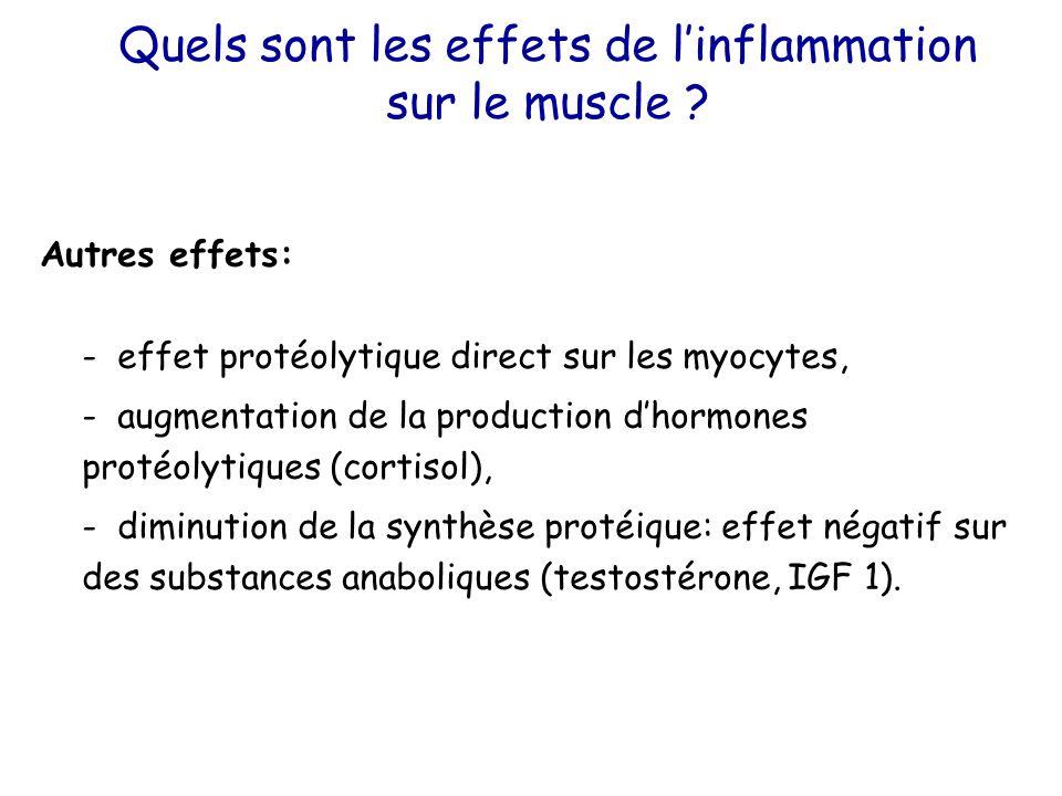 Quels sont les effets de l'inflammation sur le muscle