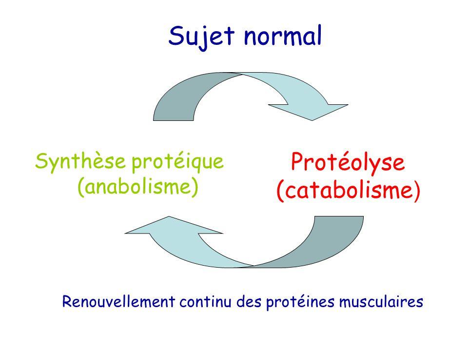 Sujet normal Protéolyse (catabolisme) Synthèse protéique (anabolisme)