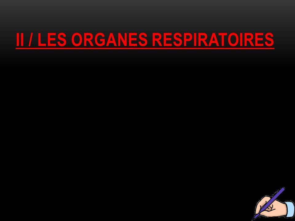 Ii / les organes respiratoires