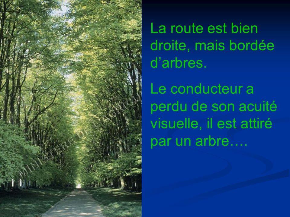 La route est bien droite, mais bordée d'arbres.