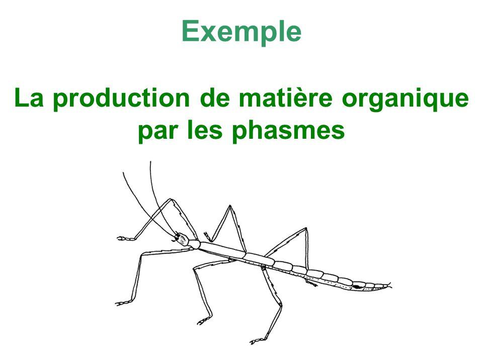 La production de matière organique par les phasmes