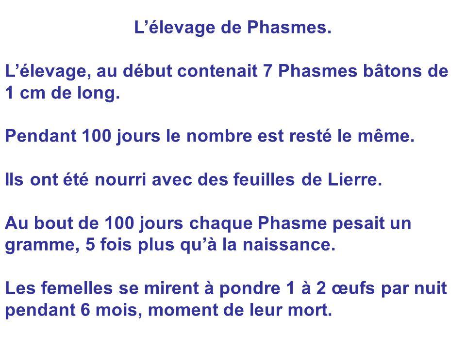 L'élevage de Phasmes. L'élevage, au début contenait 7 Phasmes bâtons de 1 cm de long. Pendant 100 jours le nombre est resté le même.