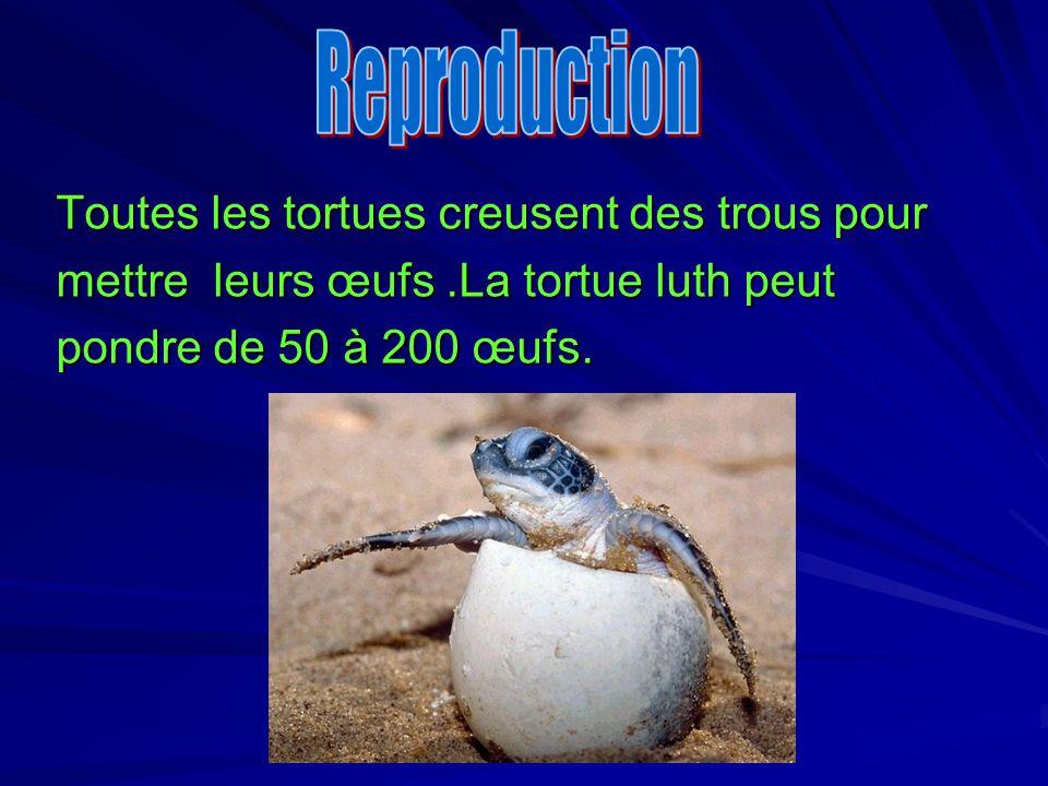Reproduction Toutes les tortues creusent des trous pour