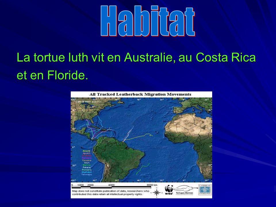 Habitat La tortue luth vit en Australie, au Costa Rica et en Floride.
