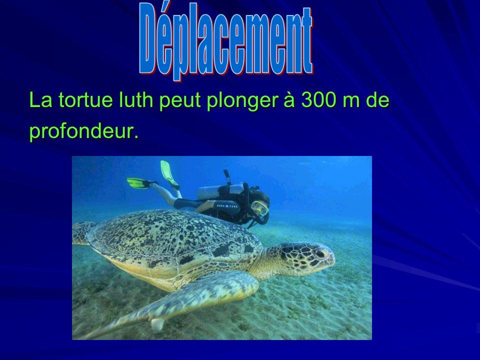 Déplacement Déplacement La tortue luth peut plonger à 300 m de