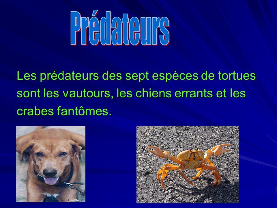 Prédateurs Les prédateurs des sept espèces de tortues