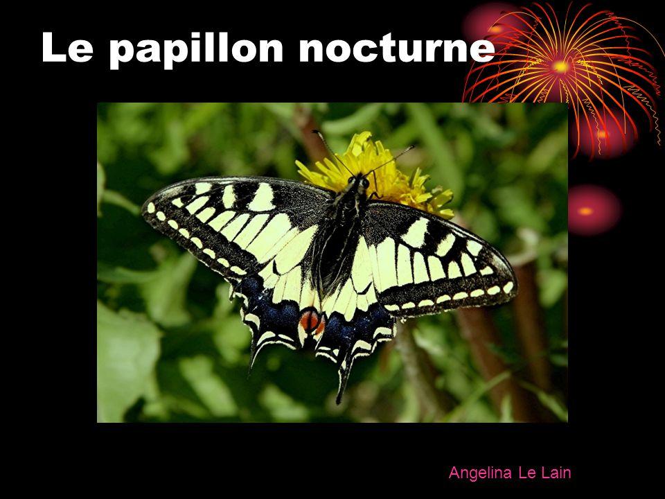Le papillon nocturne Angelina Le Lain