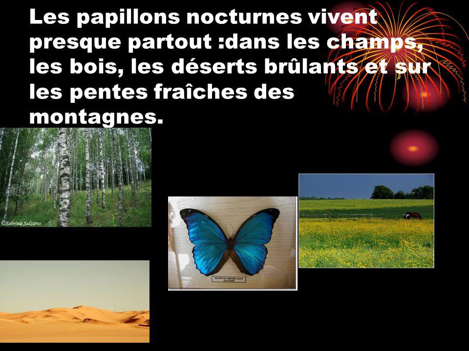 Les papillons nocturnes vivent presque partout :dans les champs, les bois, les déserts brûlants et sur les pentes fraîches des montagnes.
