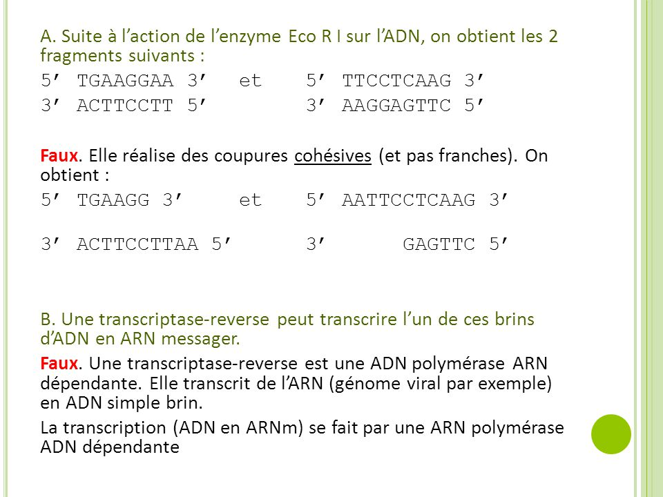 A. Suite à l'action de l'enzyme Eco R I sur l'ADN, on obtient les 2 fragments suivants :