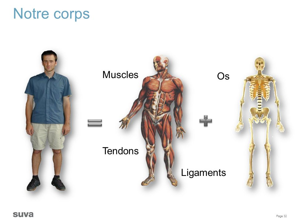Notre corps Muscles Os Tendons Ligaments
