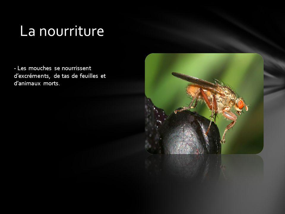 La nourriture - Les mouches se nourrissent d'excréments, de tas de feuilles et d'animaux morts.