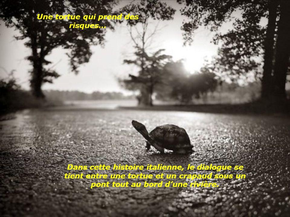 Une tortue qui prend des risques…