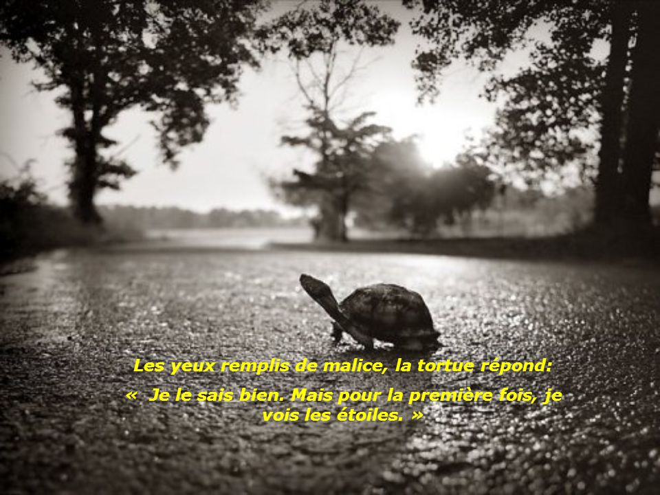 Les yeux remplis de malice, la tortue répond: