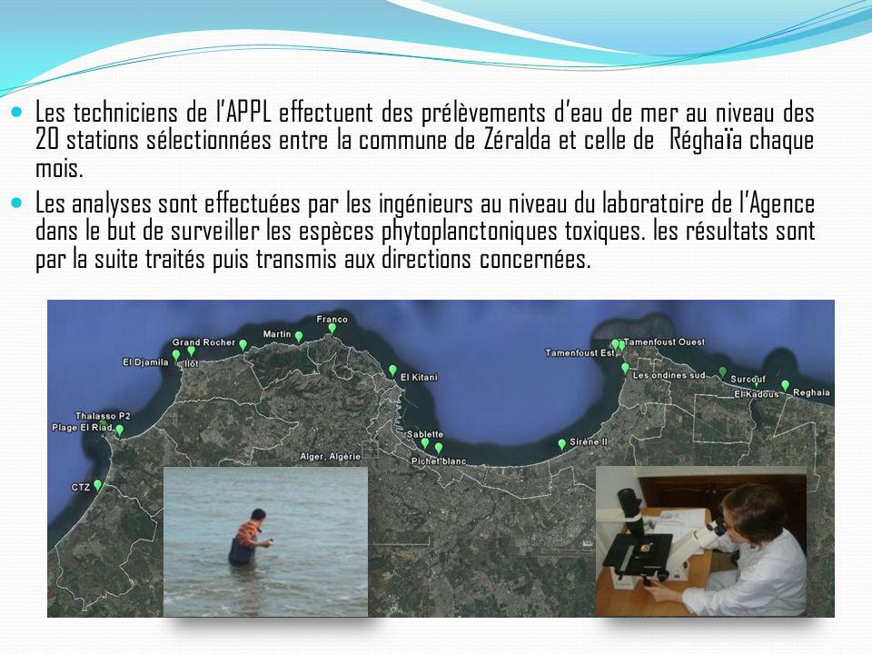 Les techniciens de l'APPL effectuent des prélèvements d'eau de mer au niveau des 20 stations sélectionnées entre la commune de Zéralda et celle de Réghaϊa chaque mois.