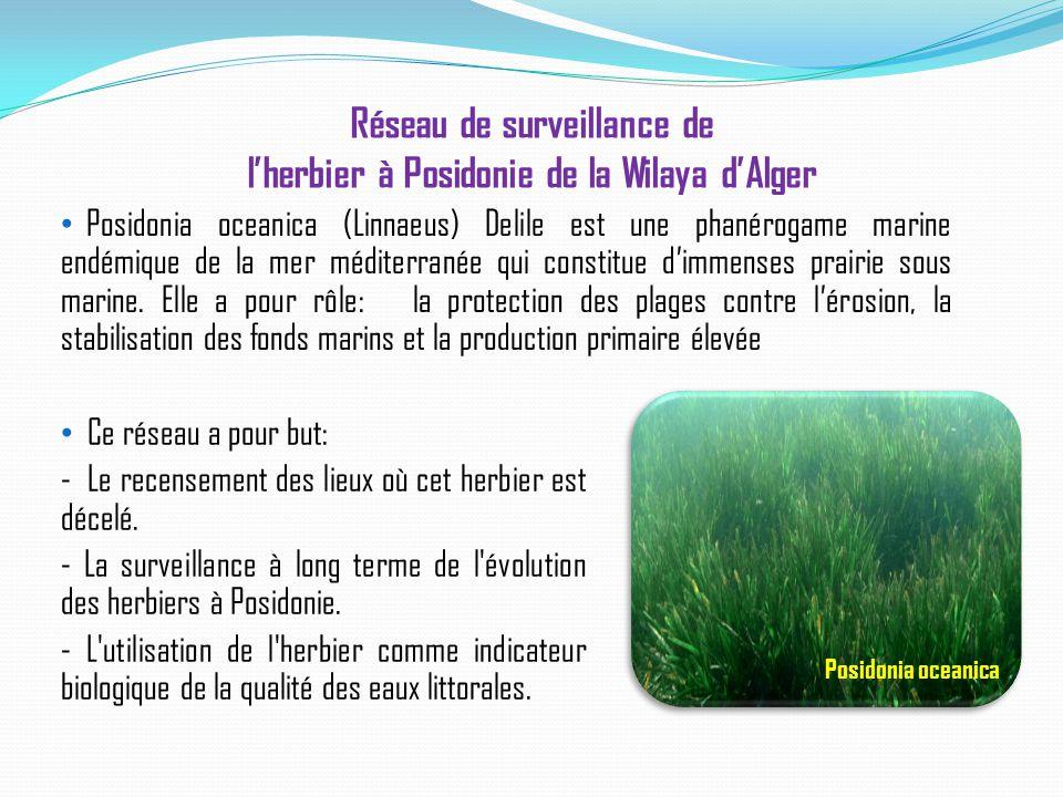Réseau de surveillance de l'herbier à Posidonie de la Wilaya d'Alger