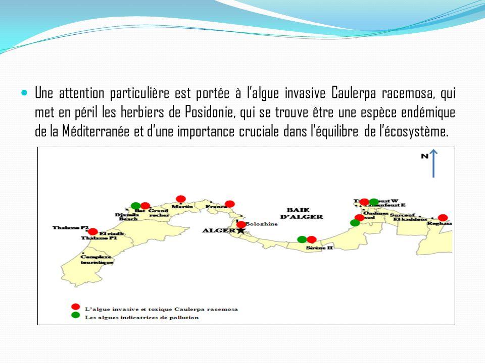 Une attention particulière est portée à l'algue invasive Caulerpa racemosa, qui met en péril les herbiers de Posidonie, qui se trouve être une espèce endémique de la Méditerranée et d'une importance cruciale dans l'équilibre de l'écosystème.