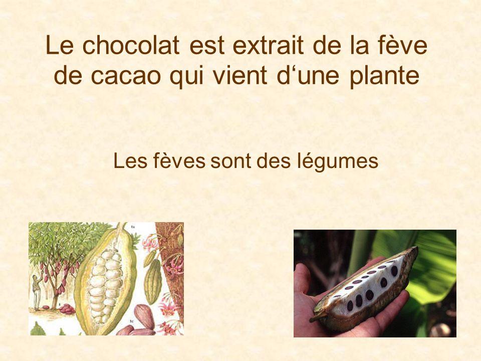 Le chocolat est extrait de la fève de cacao qui vient d'une plante