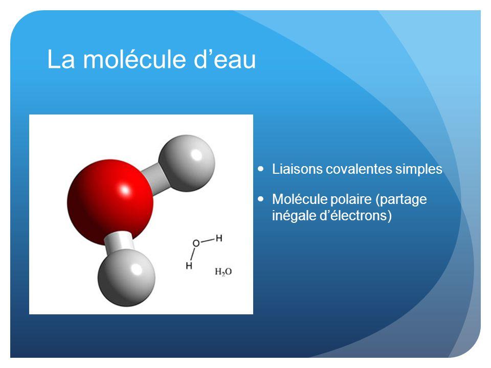 La molécule d'eau Liaisons covalentes simples