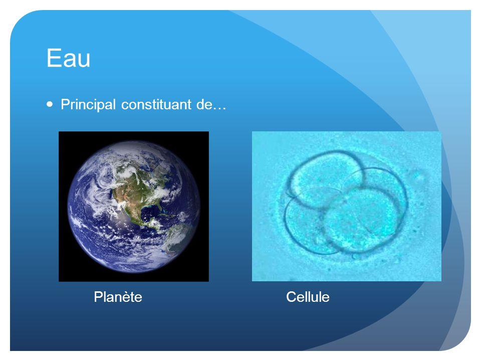 Eau Principal constituant de… Planète Cellule