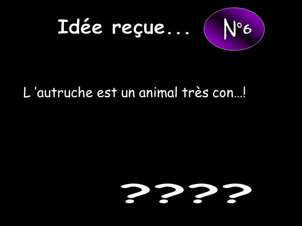 Idée reçue... N°6 L 'autruche est un animal très con…!