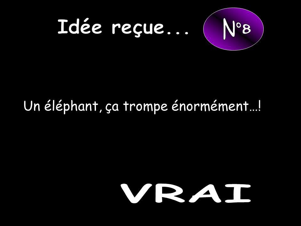 Idée reçue... N°8 Un éléphant, ça trompe énormément…! VRAI
