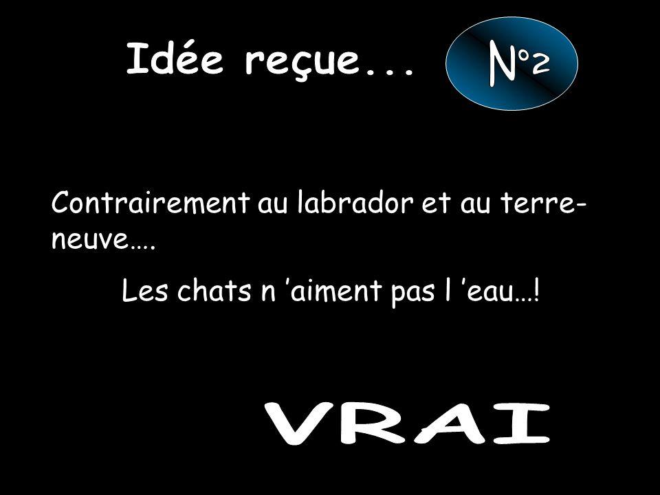 Idée reçue... N°2 VRAI Contrairement au labrador et au terre-neuve….