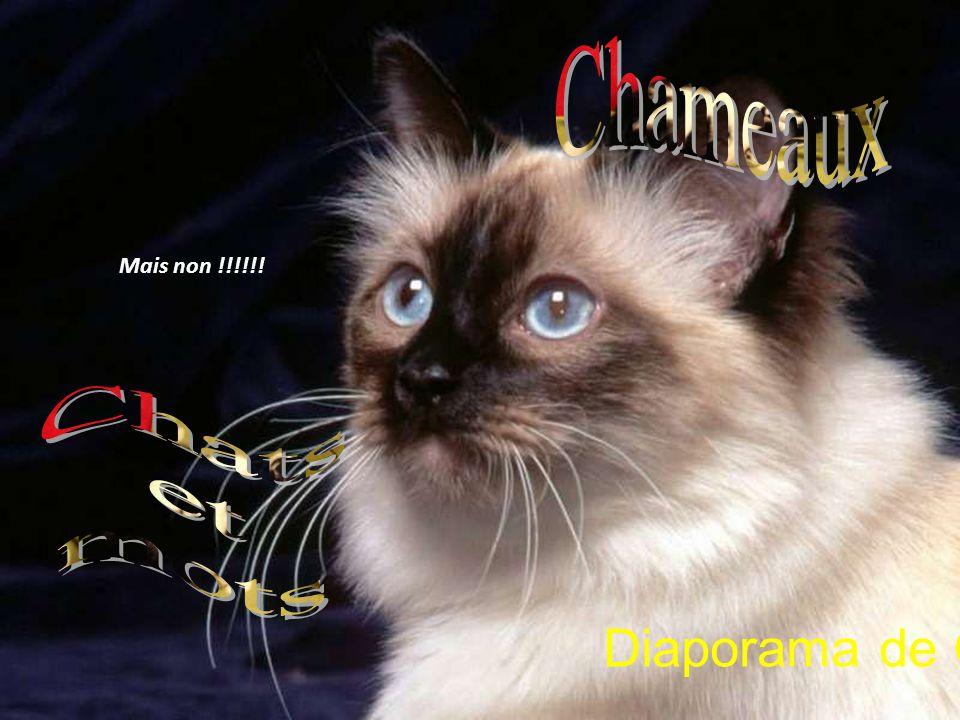 Chameaux Mais non !!!!!! Chats et mots Diaporama de Gi