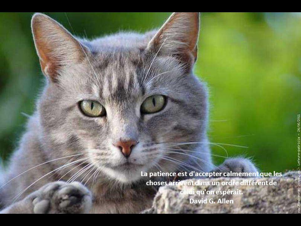 La patience est d accepter calmement que les choses arrivent dans un ordre différent de celui qu on espérait.