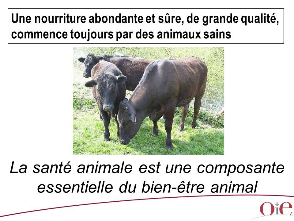 La santé animale est une composante essentielle du bien-être animal
