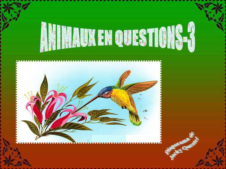 ANIMAUX EN QUESTIONS-3 Diaporama de Jacky Questel
