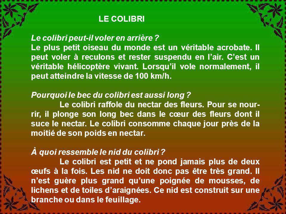 LE COLIBRI Le colibri peut-il voler en arrière