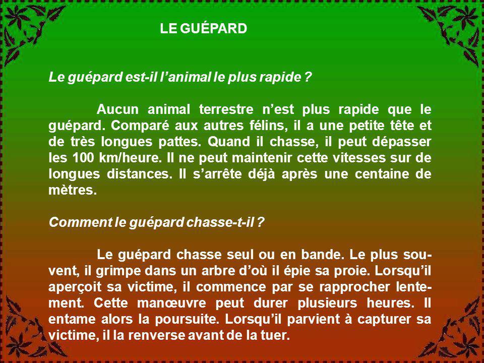 LE GUÉPARD Le guépard est-il l'animal le plus rapide
