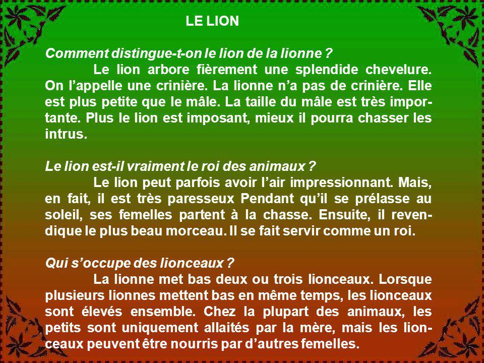 LE LION Comment distingue-t-on le lion de la lionne